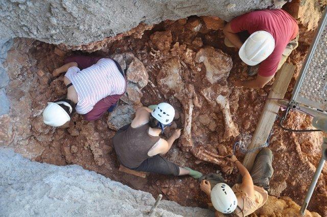 Excavación Arqueológica. Restos De Un Elefante. Fósil