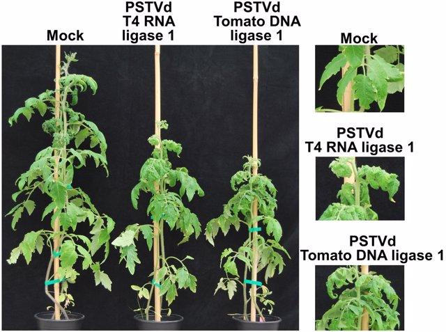 Plantas Viroides