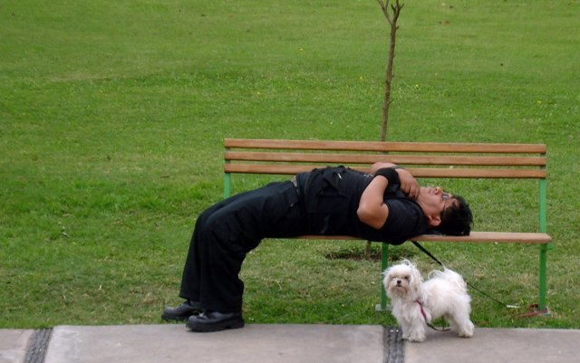 Dormir, dormido, durmiento, parque, mascota,