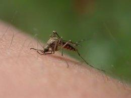 Tecnología de la ESA para erradicar los mosquitos