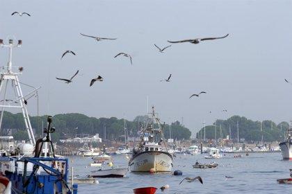 Publicadas las nuevas ayudas a los pescadores que no faenan en Marruecos