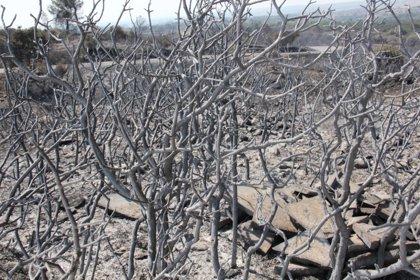 El fuego arrasa 149.298,79 hectáreas en lo que va de año, con 29 grandes incendios