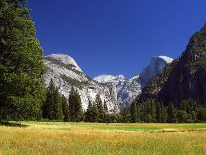 Un virus mortal causa una alerta sanitaria en el parque de Yosemite (EE.UU)