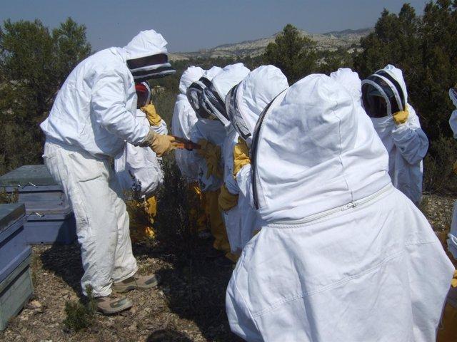 Sesión sobre apicultura en el centro de Monegrillo (Zaragoza)