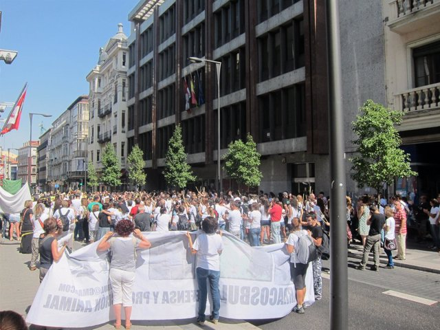 Miembros De Pacma Protestan En Valladolid Por El Toro De Vega