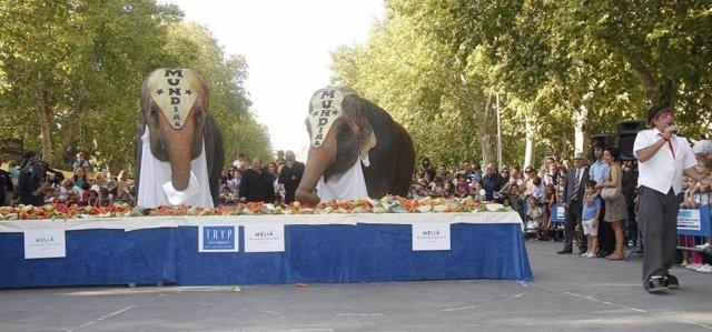 Los elefantes del Gran Circo Mundial durante una merienda del año pasado