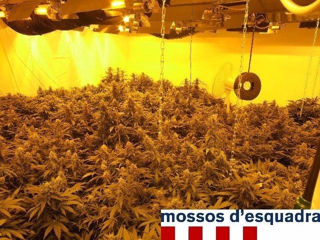 Cultivo De Marihuana En Castell-Platja D'aro
