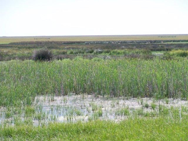 Vista De Las Marismas De Doñana