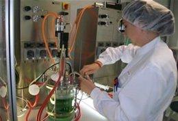 Desarrollan Prototipos De Galletas Que Refuerzan El Sistema Inmunológico
