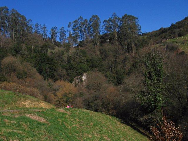 Bosque mixto sierra Pendo