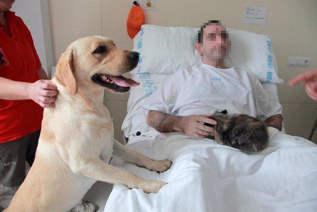 Terapia animales con enfermos mentales