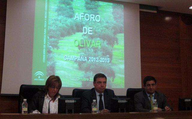 Planas, junto a Gálvez y Reyes, presenta el primer aforo del olivar 2012/13.