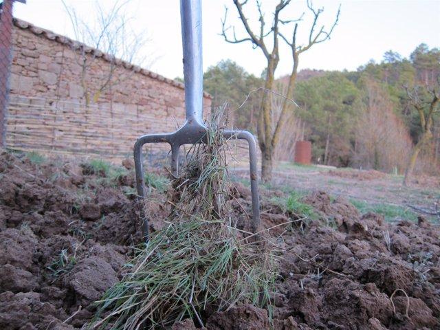 Agricultura, Agrícola, Agro, Campo, Agricultor, Siembra, Sembrar, Huerto, Horca.
