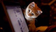 Una organización comprobará denuncias de maltrato animal