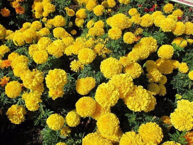 Flores, Primavera, Alergia