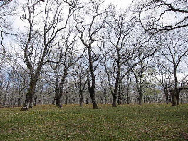 Bosque De Árboles, Robles