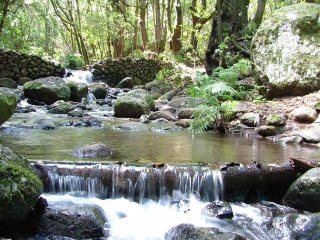 Parque Nacional Garajonay En La Isla De La Gomera