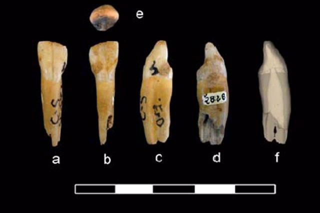 Diente de neandertal