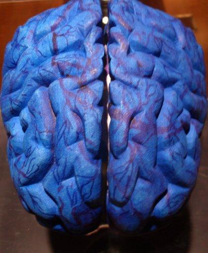 Revelan el nacimiento y la migración de células cerebrales inhibitorias