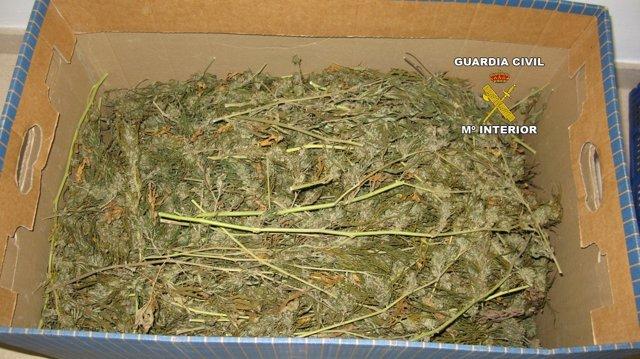 Marihuana decomisada en Inca