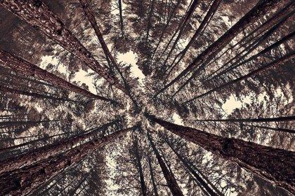 Fraga acoge la entrega de los primeros premios fotográficos de arquitectura ecológica