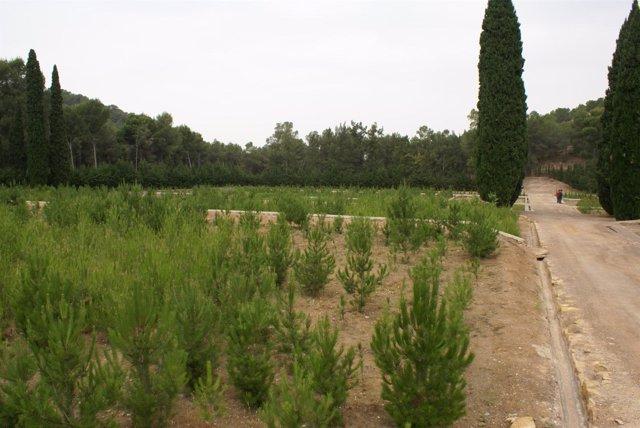 Vivero forestal de 'El Valle'