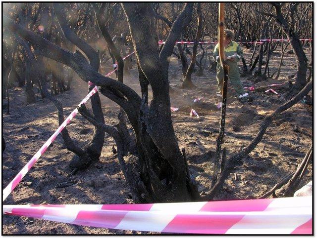 Zona Afectada Por El Incendio De La Gomera