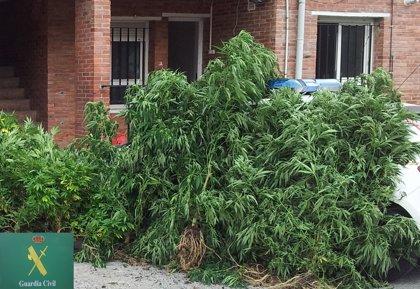 El fiscal antidroga advierte de la creación de asociaciones de consumo de marihuana que en realidad cultivan y venden