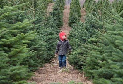 Ecologistas e ingenieros aconsejan comprar árboles de Navidad naturales