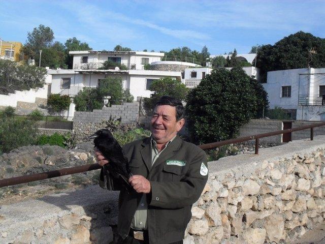 Un agente de Medio Ambiente retiene al cuervo capturado