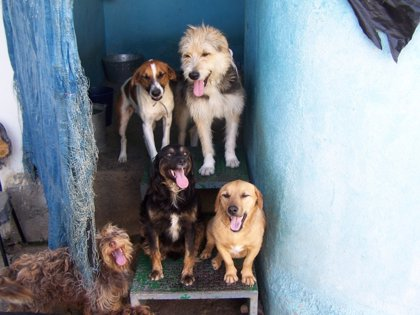 La Rioja cuenta ya con un nuevo entorno canino fundamentado en el respeto y la calidad de vida de los animales