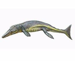 Identifican a uno de los depredadores más antiguos