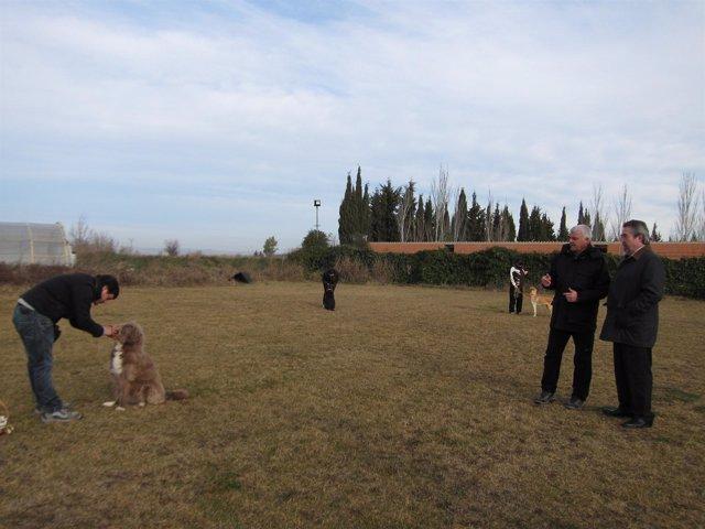 El alcalde Belloch ha asistido a un ejercicio de adiestramiento de perros