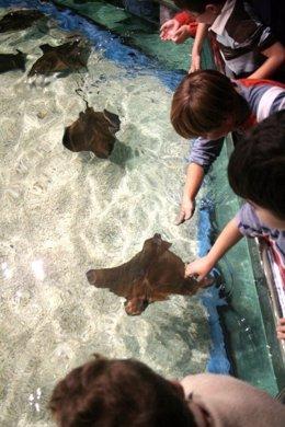 Visita escolar al Aquarium de Roquetas de Mar