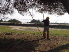 Piñero En Doñana.