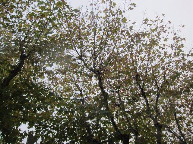Otoño, árboles, frío, nublado, tiempo, hojas