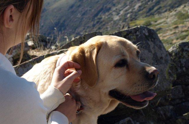 Un perro acariciado por una joven