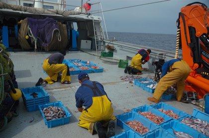 España 'tira por la borda' 164.000 toneladas de pescado al año en descartes, lo que supone 102 millones de euros