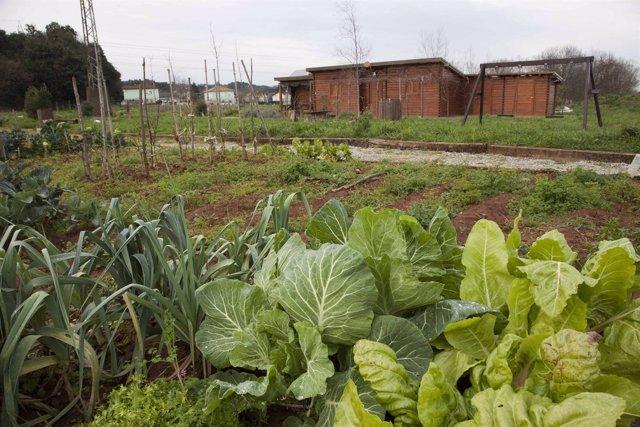 Huertos sostenibles municipales de Revilla