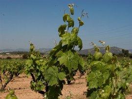 Grupo Rioja participa en el proyecto europeo Vintage, un sistema para la gestión integral del viñedo