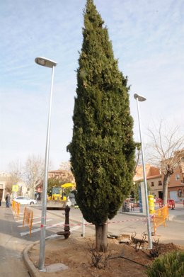 Iluminación Azucaica en Toledo,árboles,parque,árbol