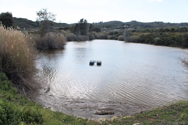 Laguna de Mijas donde se busca un cocodrilo