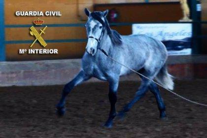 Detenidas dos personas en Puertollano por un presunto delito de maltrato de animal al matar a un caballo pura sangre