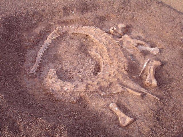 Restos de un dinosario procedente de Níger