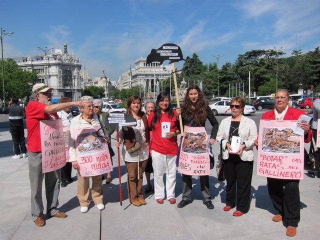 Protesta De Vecinos Del Gallinero En Cibeles