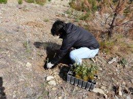 Reforestación, Plantabosques
