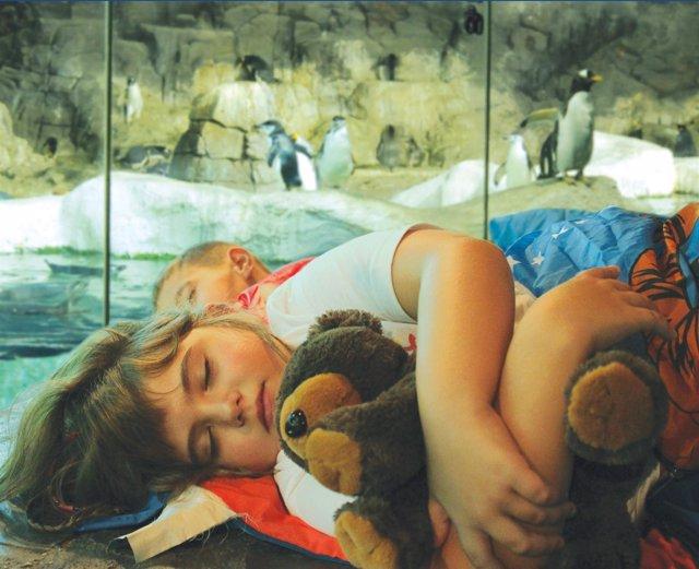 Dormir con pingüinos en Faunia