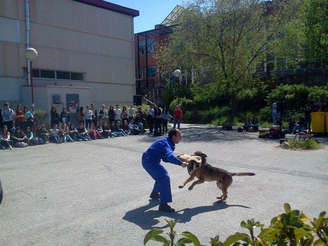 Perros policía durante el adiestramiento