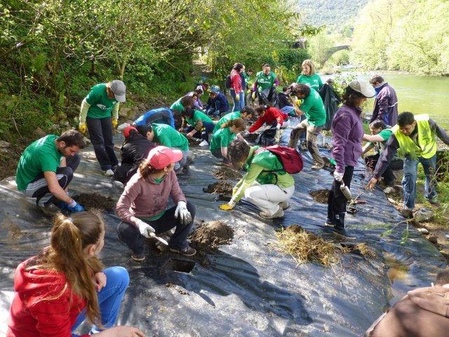 Voluntarios ambientales, PROVOCA