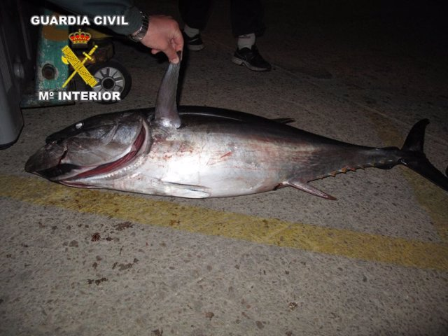 Atún rojo requisado en Vilanova i la Geltrú